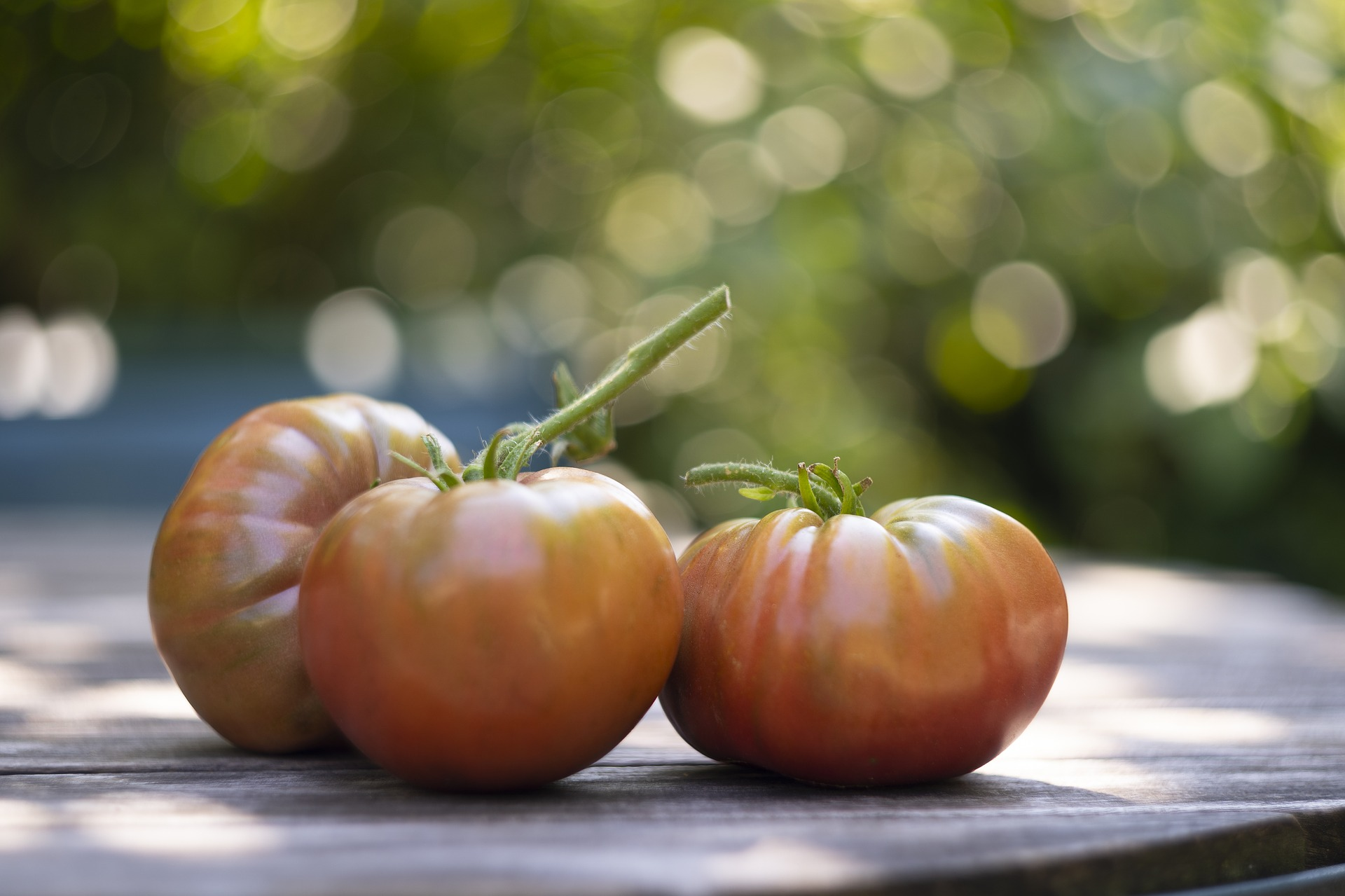 It's My Favorite Time Of Year: Buying Heirloom Seeds! 3 beautiful tomatoes