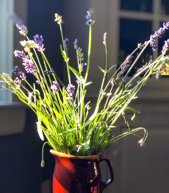 13 Ways To Preserve Fresh Herbs closeup of fresh lavender in container to dry