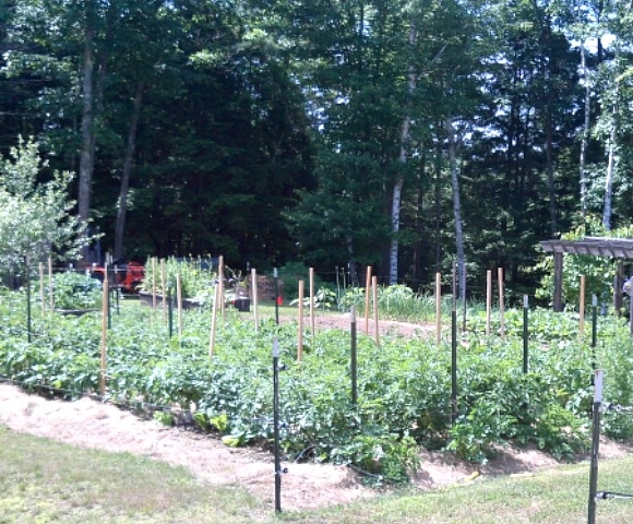 Why should we tinker - get to the bottom of the root? View of the vegetable garden