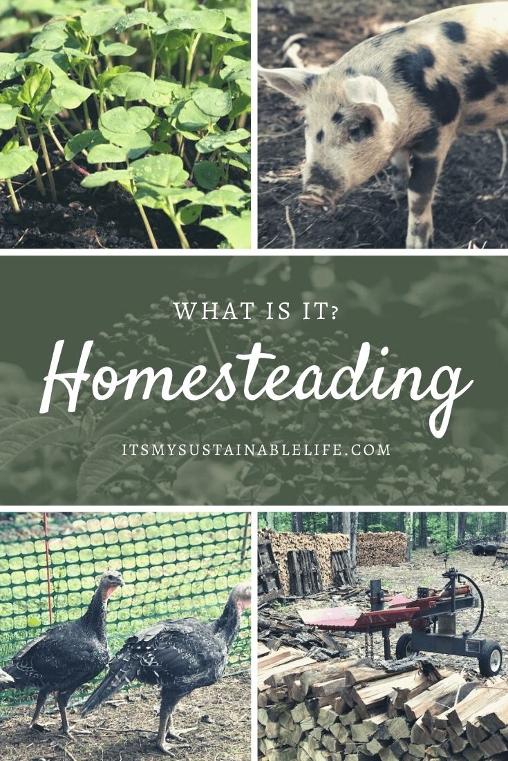 Homesteading - What is it Pin for Pinterest